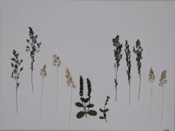 """Betegnet """" Vilde planter, 9"""" ved NORA 2015 - UNIKA  Opsætning"""