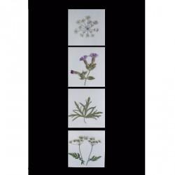 Blomsterkort med tørrede vilde planter af Nora - kvadratiske