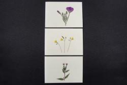 Blomsterkort med tørrede vilde planter af Nora - karton