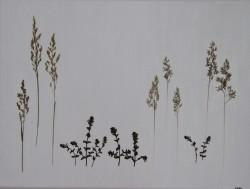 """Betegnet """" Vilde planter, 4"""" ved NORA 2015 - UNIKA  Opsætning"""