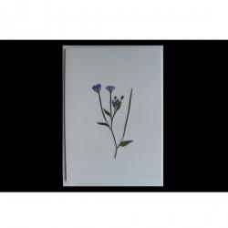 Blomsterkort med tørrede vilde planter af Nora - med kuvert