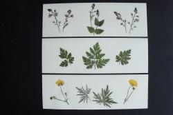 Blomsterkort med tørrede vilde planter af Nora - rektangulære